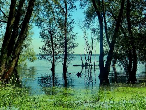 Topielisko #jezioro #zalew