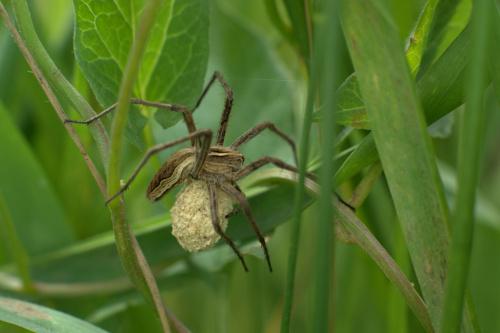 Mamusia #pająki