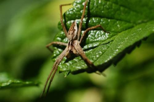 Pajączek #pająki