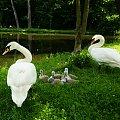 Rodzinka #Ptaki