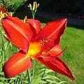 To jest kwiatek :) #roślina #przyroda #kwiat