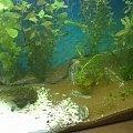 zomiren1 akwarium 4sierpnia2015 (2dni po zalaniu) #zomiren1 #akwarium #sierpień