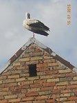 http://images69.fotosik.pl/1174/1f2311c2512b1a34m.jpg