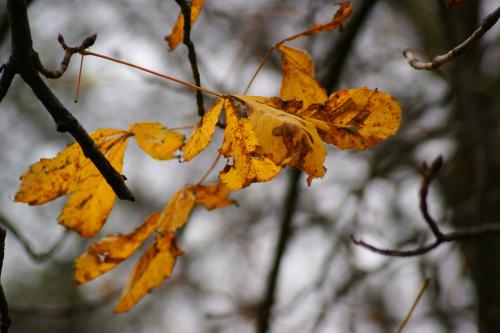 Kolejny listek jesieni.
