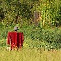 Strach:) #StrachNaWróble #łąka #warzywo #lato