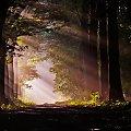 w alejce o świcie #kwiaty #las #makro #motyle #owady #przyroda #zwierzęta