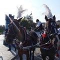 Przepiękne krakowskie konie #konie #Kraków