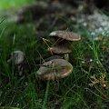 #grzyby #grzybki #natura #przyroda