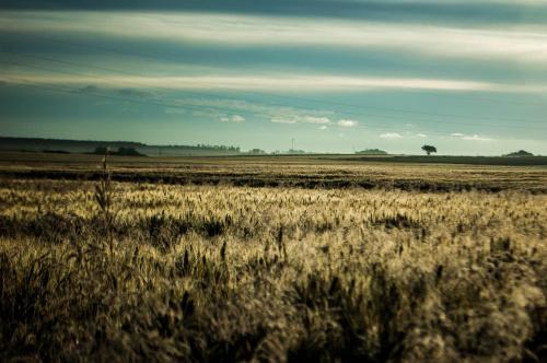 Wschód nad polami #pola #wschód #niebo #łąki #zboża #natura #przyroda