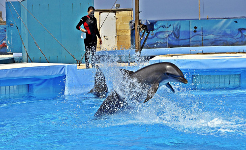 delfin, malta #delfin #malta