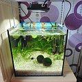 #akwarium #rośliny #ryby