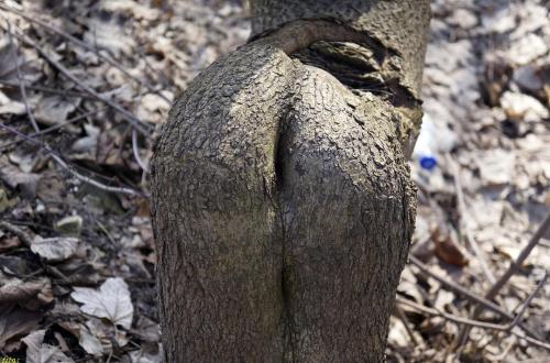 nawet drzewa mają wszystko w d.... #drzewa #przyroda