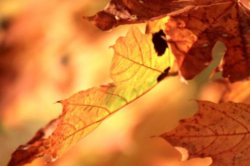 ��ty jesienny li��.....
