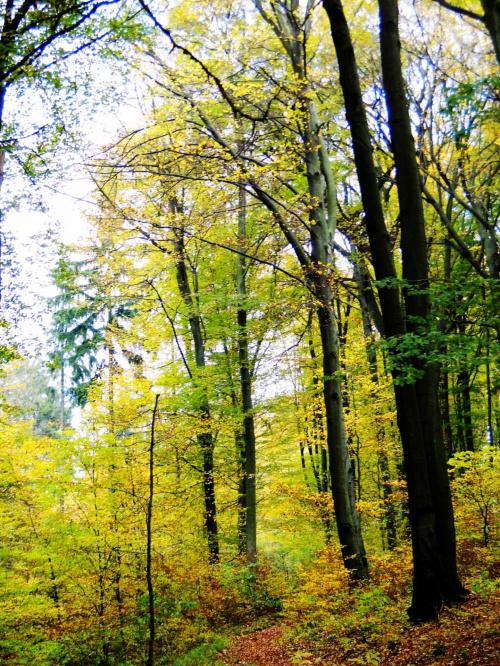 #Jesień #przyroda #natura #las #liście