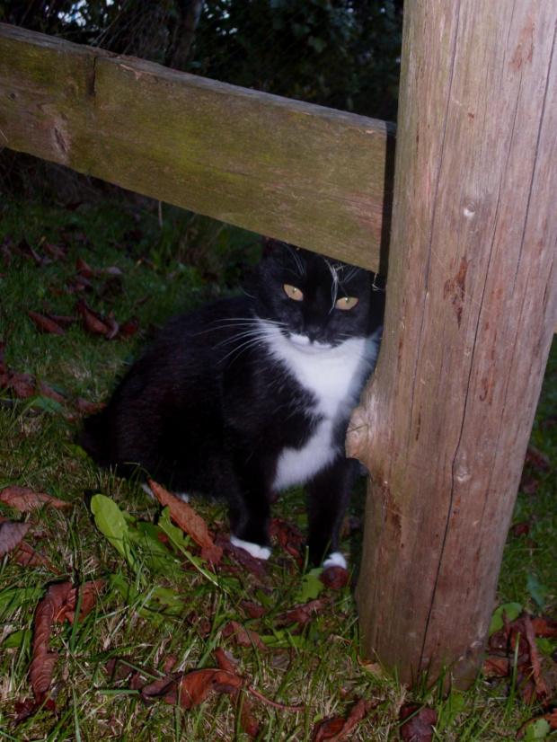 Jesienna koteczka #jesień #kot #dzialka