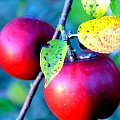 #wisna #lato #jesień #zima