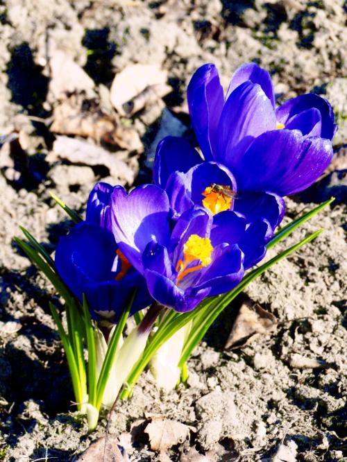 Marzec #kwiaty #natura #przyroda #Wiosna