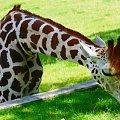 inspirację można znaleźć wszędzie ;) #zwierzęta #postacie #zabytki