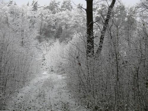 styczeń, luty #grudzień #gwiazdki #luty #stycvzeń #śnieg #święta #zima