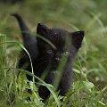 Kociak #Zwierzęta #koty