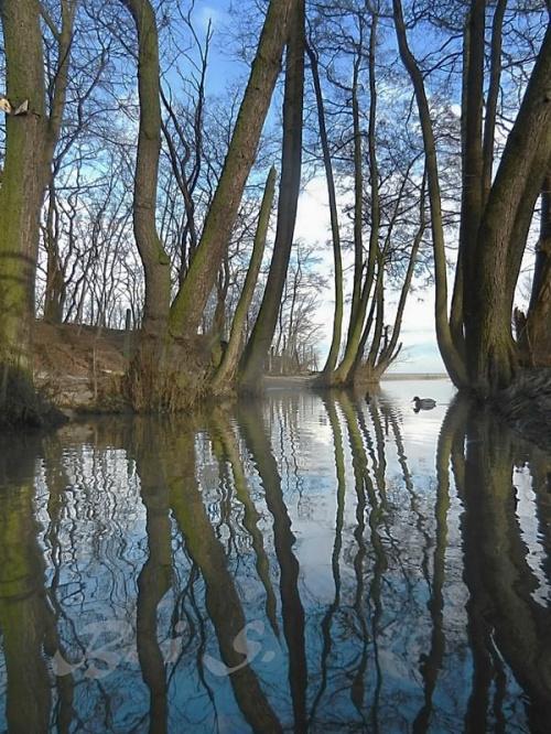 Znów wiosna - już chyba trzecia tej zimy #wiosna #potok