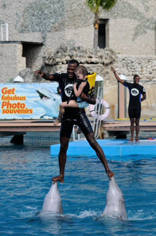 Delfin #delfin #dominikana