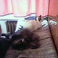 Boguś z Kają na suszarce #koty