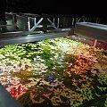 Belka oświetleniowa LED do akwarium #akwarium #belka #oświetlenie #ryby