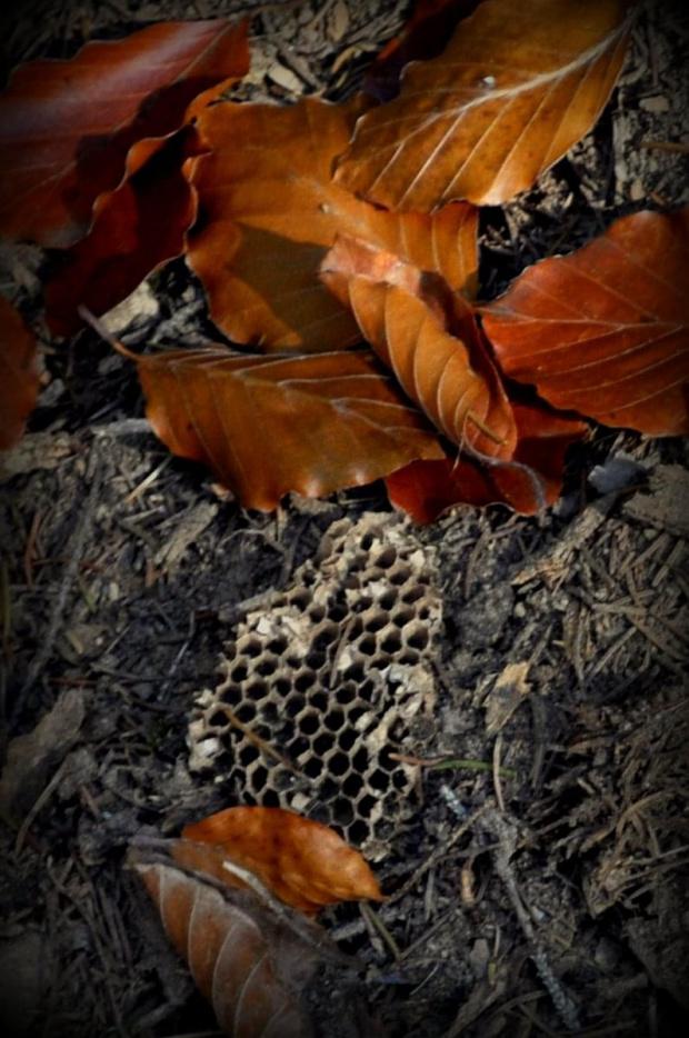 Kamesznica - Beskid Śląski #BaraniaGóra #BeskidŚląski #beskidy #góry