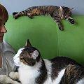 tajfun i nina #kociaki #kot #koteczki #koty