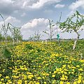 #wiosna #sad #krajobraz