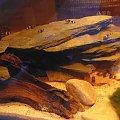 "Babka złota ""osa"" #akwarium #filtr #krewetki #ryby"