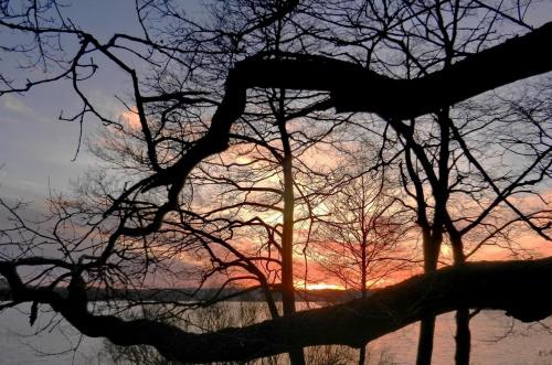 ...miejsca, gdzie drzewa rosną poziomo ...i chwytają światło w dłonie - mnie się nie udało, ale może jeszcze... #ZachódSłońca #Tuchomskie #Magda