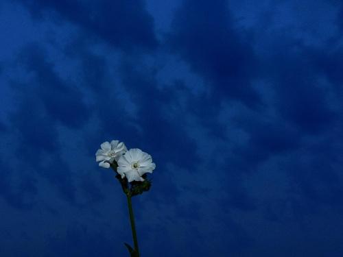 World in blue #kwiat #niebo #niebieski #flower #sky #blue