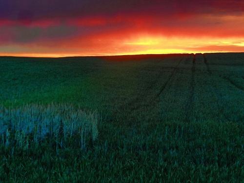 kontrast i dysharmonia #zachód #pole #niebo